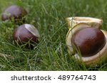 Conkers On The Grass In A...