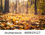 Bright Yellow Leaves On The...