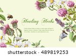 vector wild flowers and herbs... | Shutterstock .eps vector #489819253