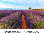 lavender field summer landscape ... | Shutterstock . vector #489869647