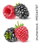 isolated berries. two images of ... | Shutterstock . vector #490164787