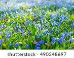 close up macro photo of little... | Shutterstock . vector #490248697