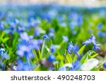 close up macro photo of little... | Shutterstock . vector #490248703