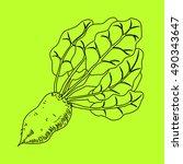 mangelwurzel  a root vegetable  ... | Shutterstock . vector #490343647