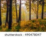 autumn sunset in the siberian... | Shutterstock . vector #490478047