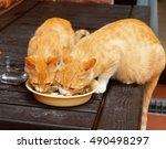 Gold Cats Eating Food From A...
