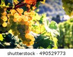 bunch of fresh organic grape on ... | Shutterstock . vector #490529773