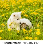 Stock photo puppy and kitten lying together on a green grass 490582147