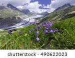 aletsch glacier ... | Shutterstock . vector #490622023