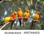 Colorful Parrots In Safari...