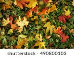 autumn leaves on the ground | Shutterstock . vector #490800103