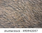 Boar Fur Texture.