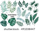 vector tropical palm leaves ... | Shutterstock .eps vector #491038447