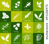 Herbs Hand Drawn Vector Square...