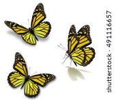 beautiful three yellow monarch... | Shutterstock . vector #491116657