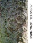 Small photo of Macro Nageia tree bark