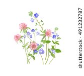 summer meadow flowers. veronica ... | Shutterstock . vector #491232787