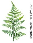 fern painted with watercolors... | Shutterstock . vector #491594317