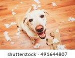 naughty dog home alone   yellow ... | Shutterstock . vector #491644807