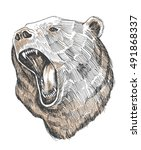 hand drawn bear vector... | Shutterstock .eps vector #491868337