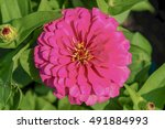 flower in garden   Shutterstock . vector #491884993