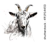 colored hand sketch of goat... | Shutterstock .eps vector #491914453