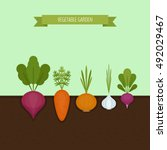 vegetable garden banner.... | Shutterstock .eps vector #492029467