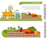 vegetable garden. organic and... | Shutterstock .eps vector #492029473