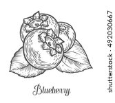 Blueberry Berry  Fruit  Leaf ...
