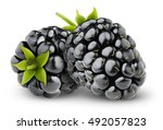 isolated blackberries. two... | Shutterstock . vector #492057823