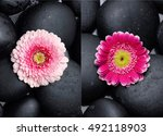 Two Gerbera Daisy And Pile Of...