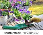 woman hands holding flower to...   Shutterstock . vector #492204817