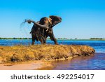 lone elephant clean river silt.... | Shutterstock . vector #492254017