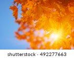 autumn leaves on the sun | Shutterstock . vector #492277663