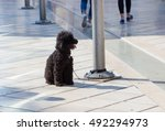 Poor Dog Tied To A Pole On...