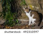 Cat Bathing In Sun