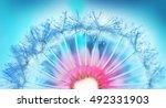 dew drops on a fuzz dandelion... | Shutterstock . vector #492331903