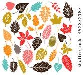 leaves  acorn  isolated on...   Shutterstock .eps vector #492372187