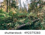 Deep Autumn Forest With Warm...