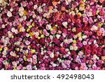 Stock photo rose background colorful rose wall background with different types of roses 492498043