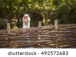 White Goose Stretching Its Nec...