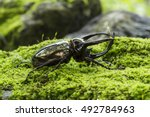 Insects  Beetles Giant...