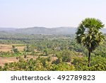Small photo of Serene view of the countryside on the outskirts of Mangalore, Karnataka, India. Palmyra palms and coconut palms can be seen all over.