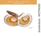 scallop. marine food | Shutterstock .eps vector #492796303