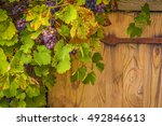 Small photo of Grapes on their vines - Beautiful autumnal frame, close up with a bunch of red grapes on their vines, grown around an old house trap door.
