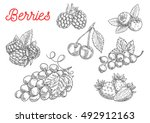 summer fruit and berry sketch.... | Shutterstock .eps vector #492912163