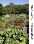 Small photo of Growing food in an allotment in Autumn