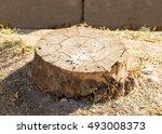 Tree Stub  Deforestation.