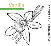 vanilla pods and flower... | Shutterstock .eps vector #493126123