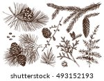 vector collection of conifers... | Shutterstock .eps vector #493152193